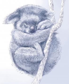 koala_blau2.jpg